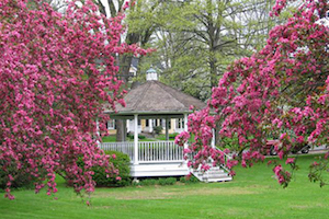 gazebo with cherry blossoms in bloom